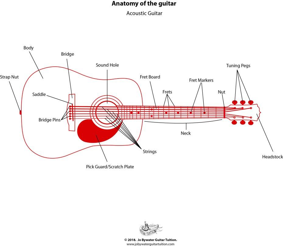 Acoustic Guitar - Labelled Diagram